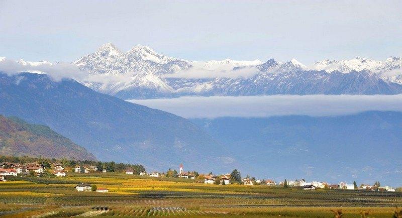 vigneti di Montagna in Alto Adige